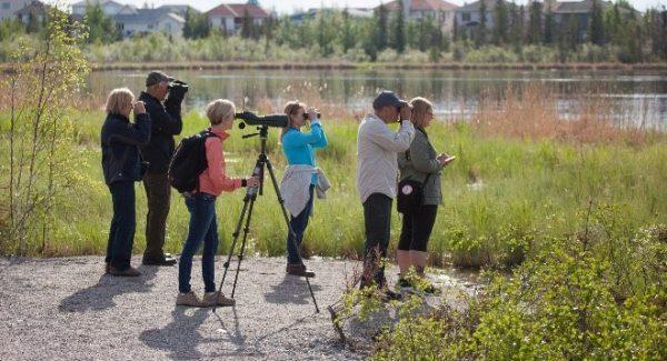 TA - birding tour - Copy